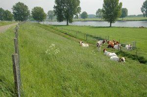 Agrarische functie met jongvee.