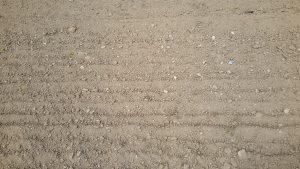 Eggen kale grond (foto WSRL)