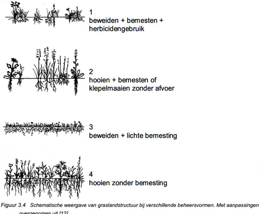 Schematische weergave van graslandstructuur bij verschillende beheervormen [RWS, 2012]