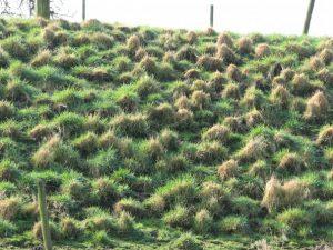 Pollig talud door slechte beweiding (WSRL)