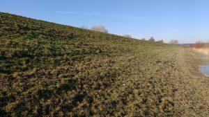 Noordtalud, flauw met onder oude en boven nieuwe grasbekleding (WSRL)