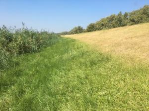 Optrekkend vocht vanuit teensloot in droog talud (WSRL)