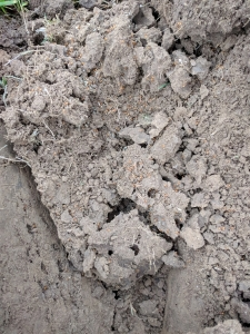 Mierenhopen open gegraven (Aa en Maas)