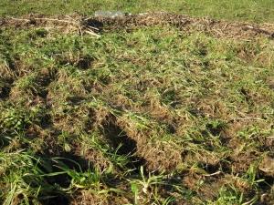 Erosieafslag, wortels kaal gespoeld (WSRL)