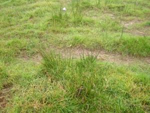Natte plekken, verandering van vegetatie (Digigids)