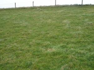 Sterkte graszode, goed maar weinig soortenrijkdom (Digigids)